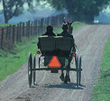 A horse drawn carriage takes you into a real Mennonite farm.